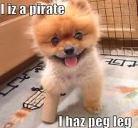 Peg-leg-puppy-random-7503700-329-306