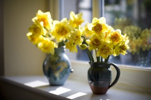 Decorative vases of daffodils